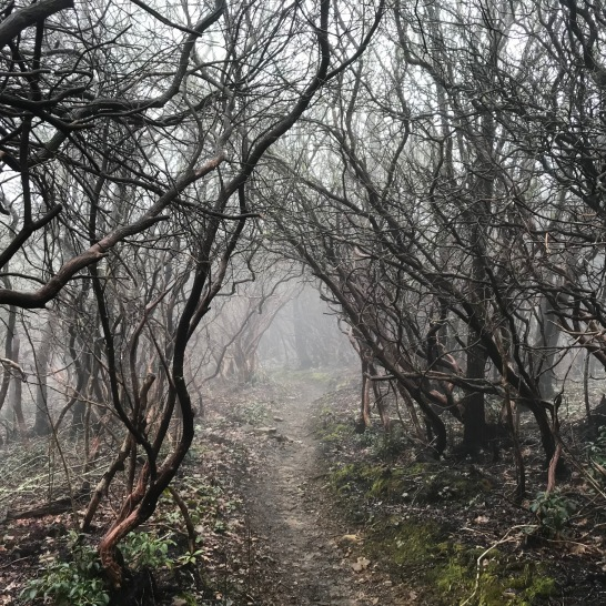 spooky-trees